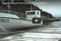 Organic Mussel Farming in Newfoundland