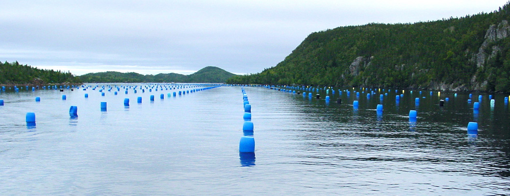 The waters surrounding Newfoundland create ideal conditions
