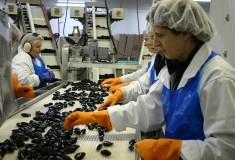 State of the Art Processing Plant